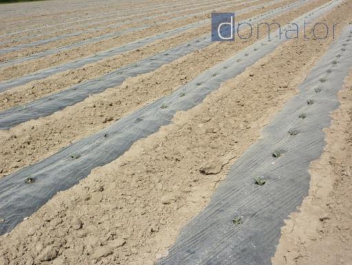 SZPILKI KOTWICE KOŁKI 50szt 25cm do agrowłókniny